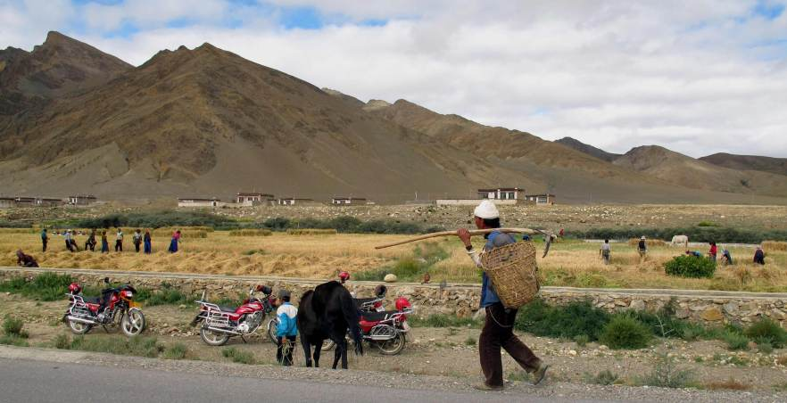 Harvest season, the only one in Tibet